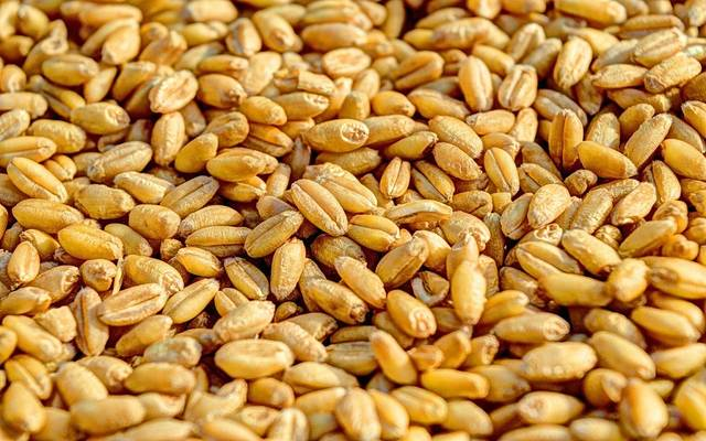 Egyptian supply: the total domestic wheat supplies increased to 2.1 million tons