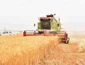 Agricultural research: The production of acres of wheat project West Minya reached 25 Ardeba