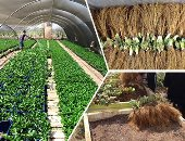 Agriculture approves the export of 277 thousand fruit seedlings from 11 varieties within a week