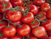 Tomatoes exported 143 thousand tons with 50 million dollars