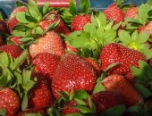 Egypt is the first in the world to export frozen strawberries in 2019, at a value of $ 165 million
