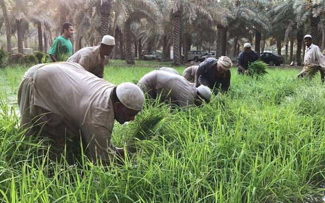 Egyptian agriculture applies the farmer card system in Assiut