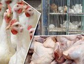Agriculture agrees to issue 6476 operating licenses for poultry farms within 6 months