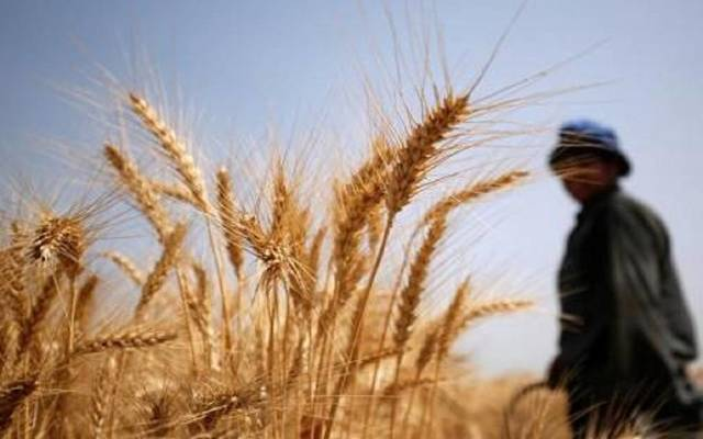 Egyptian government confirms commitment to purchase wheat crop and sets a minimum price