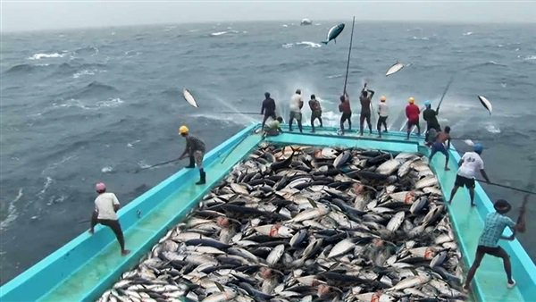 Export and import requirements: Fish development should be approved